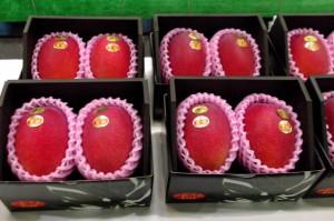 「夏姫」の基準 ・糖度15度以上 ・1玉2L(350g)以上 ・外観の紅色が3分の2以上