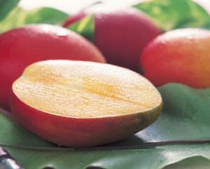 kagoshima-mango