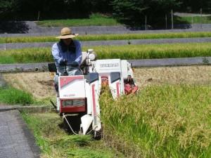 超早場米の収穫風景