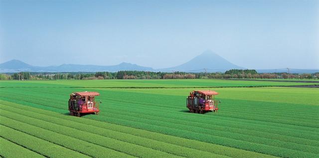 南九州市の茶園と常用型摘菜機